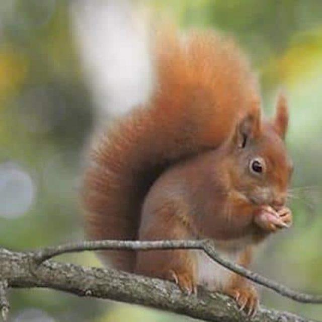 Squirrel Breakfasts