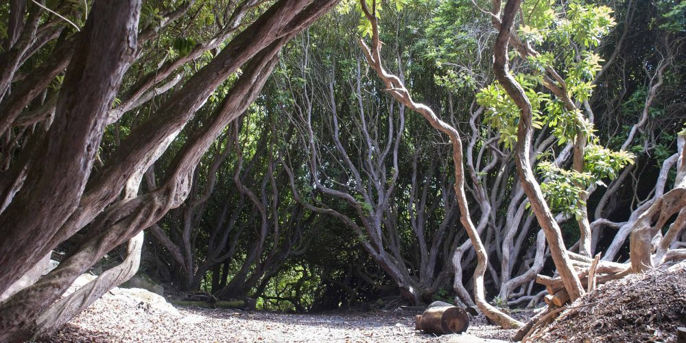 New Tree Trail at Portmeirion